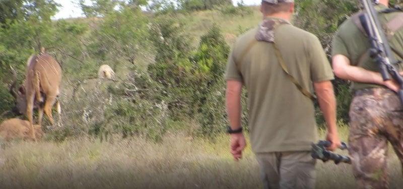 Stalking a Kudu