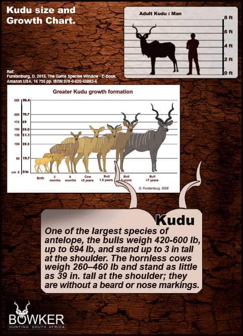 Growth chart for Kudu bulls over the life span of the kudu.