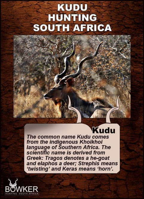 Kudu local names in African languages.