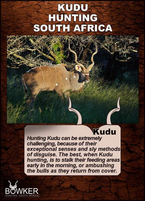 Some of the best kudu hunting methods include stalking their feeding areas early in the morning.