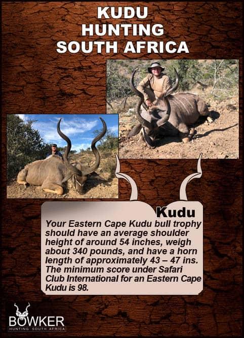 Hunting the Eastern Cape Kudu