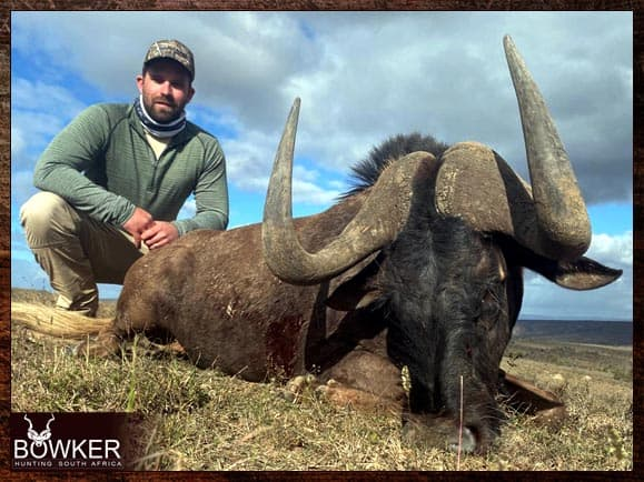 Black Wildebeest hunting in South Africa
