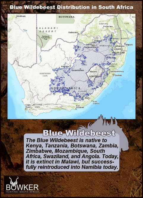 Distribution in South Africa