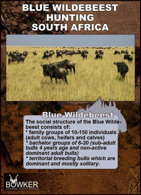 Herds and social structure.