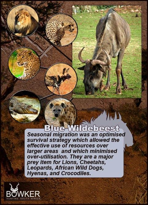 Predators include lion and hyena.