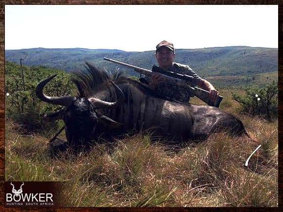Blue Wildebeest hunting - trophy shot in the Eastern Cape South Africa. Blue Wildebeest can be added to any of our South African Hunting Safari Packages.