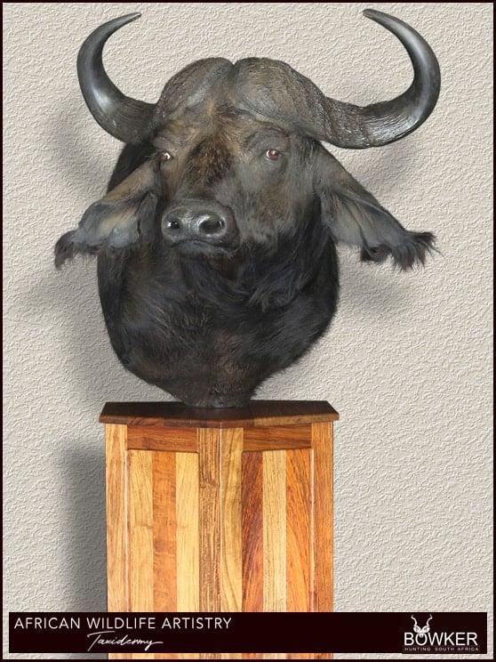 Buffalo shoulder mount.
