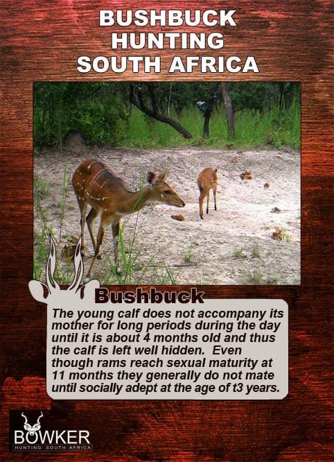 Breeding habitats and young