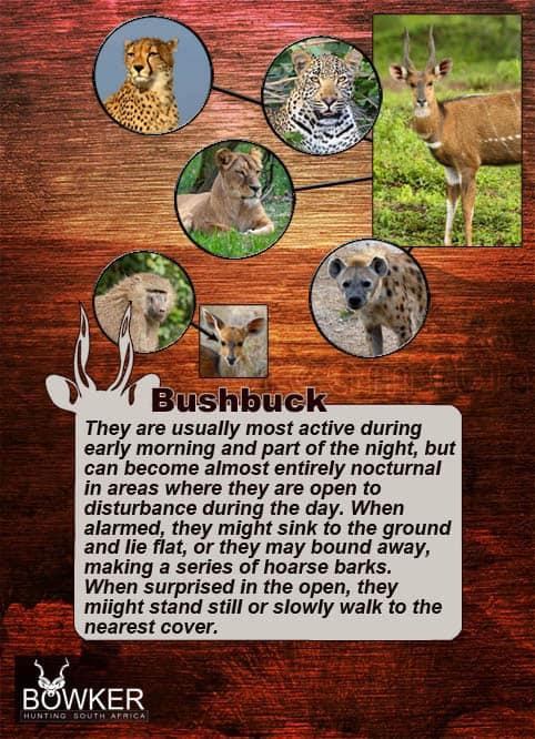 Predators include lion and wild dog