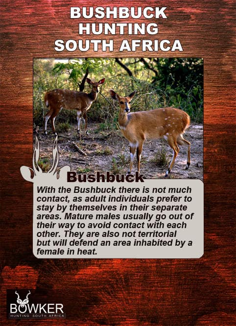 Bushbuck do not have much contact with each other.