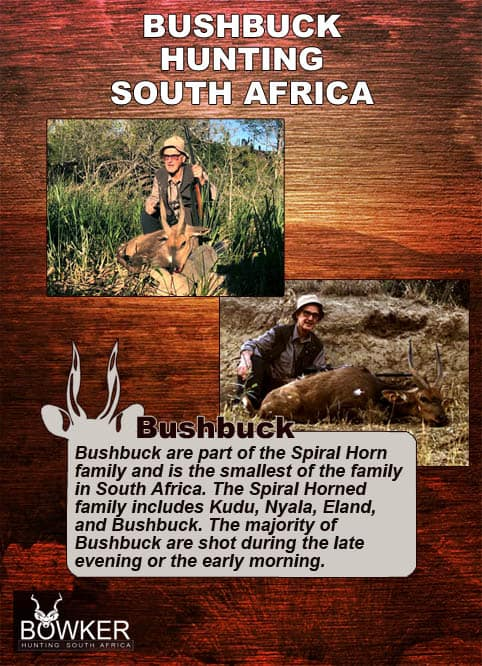 Red hartebeest trophy hunting.