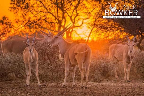 Females in the sunset with male in the background.