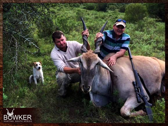 Eland trophy shot in South Africa