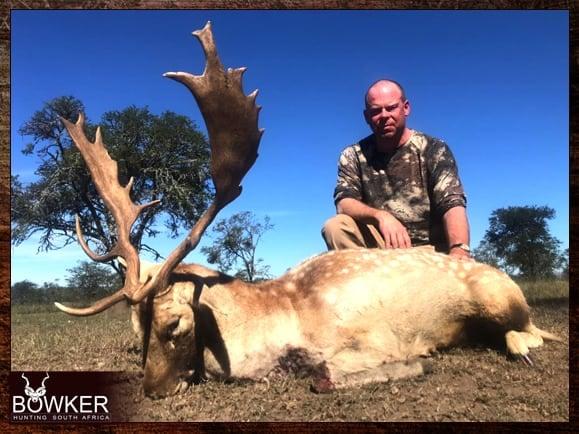 Fallow Deer trophy