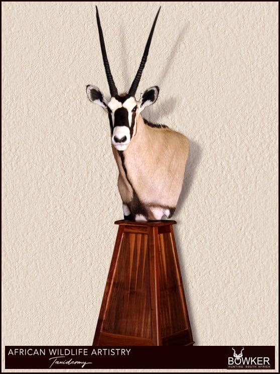 Gemsbok floor mount. African taxidermist price list.