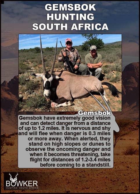 Gemsbok trophy hunted. Gemsbok have very good eyesight.