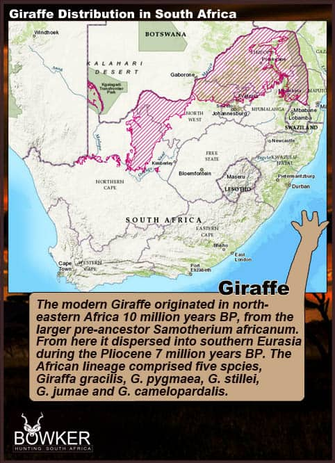 Distribution through South Africa