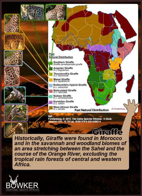 Giraffe distribution across Africa.