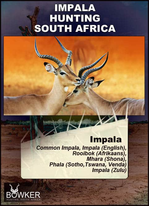 Local African names of the impala.