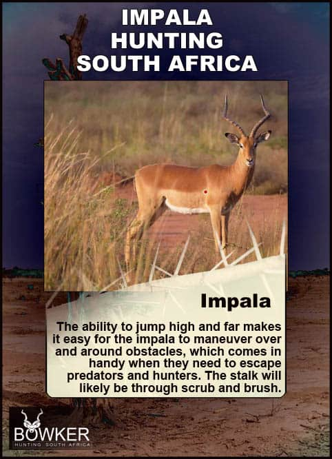 Shot placement for impala hunting.