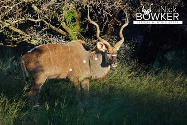Shot placement should be on the bottom third of the shoulder for Kudu hunting