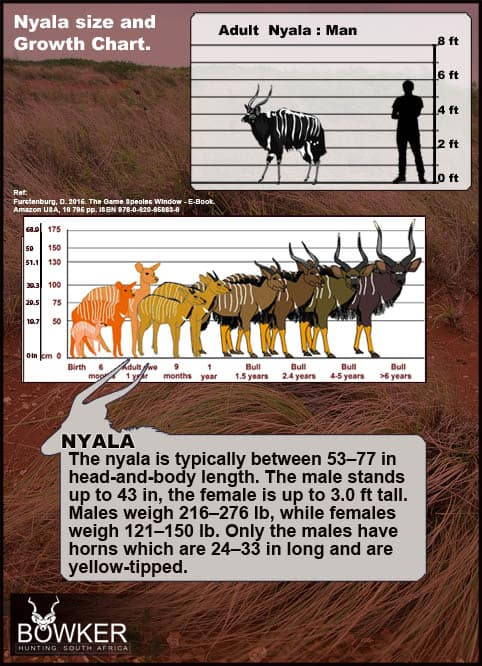 Nyala development over time.