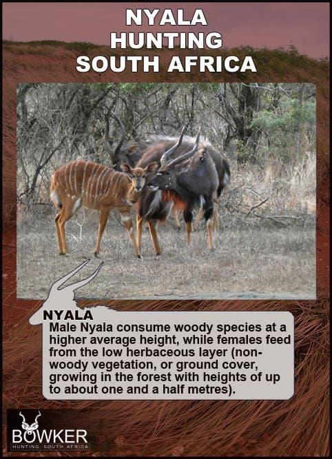 Nyala diet is varied.