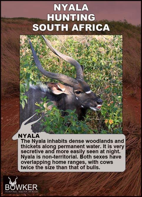 Nyala live in dense brush.