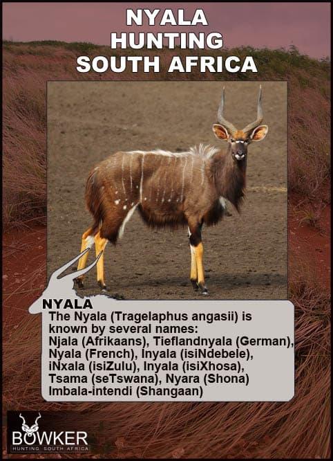 Nyala names in African languages.