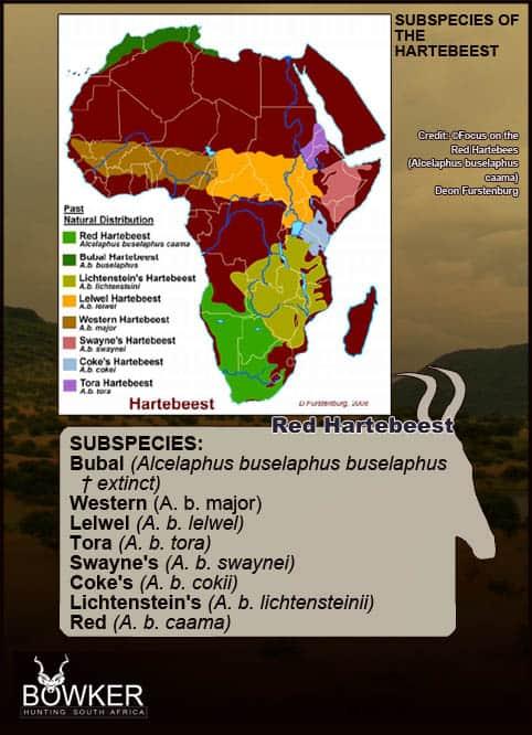 Sub species distribution across Africa.
