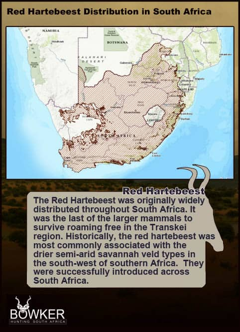 Red Hartebeest distribution in South Africa.