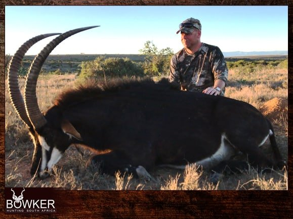 Sable antelope trophy shot with Nick Bowker Hunting
