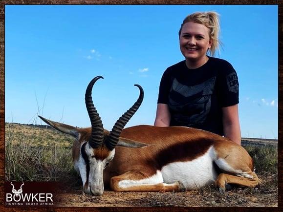 Common springbok hunting
