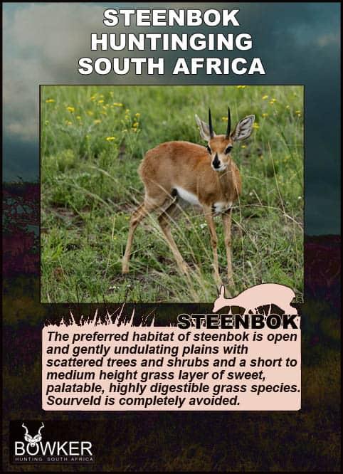 Steenbok habitat in South Africa.
