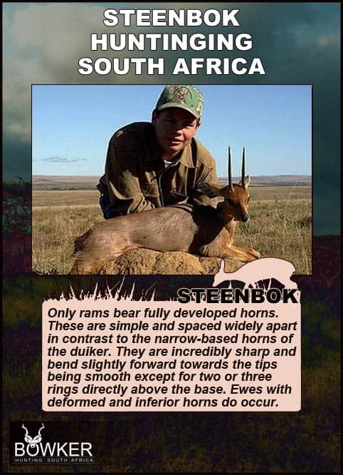 Steenbok hunting in South Africa.