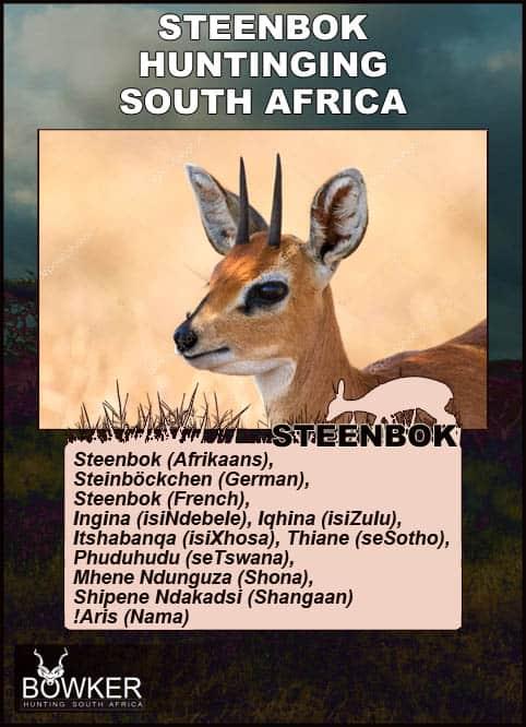 Description of the steenbok.