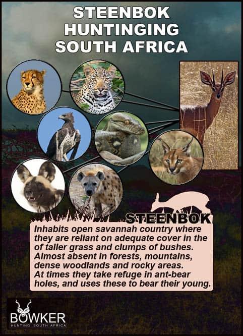 Steenbok predators.