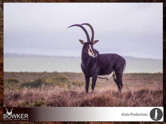 Capture your African hunting adventure on video