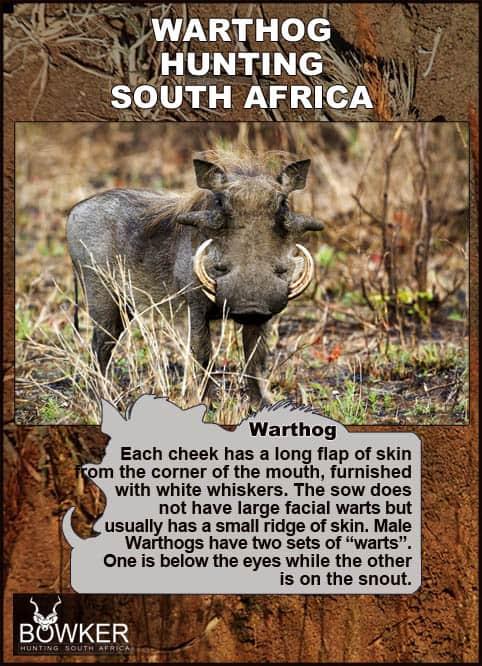 Warthog description
