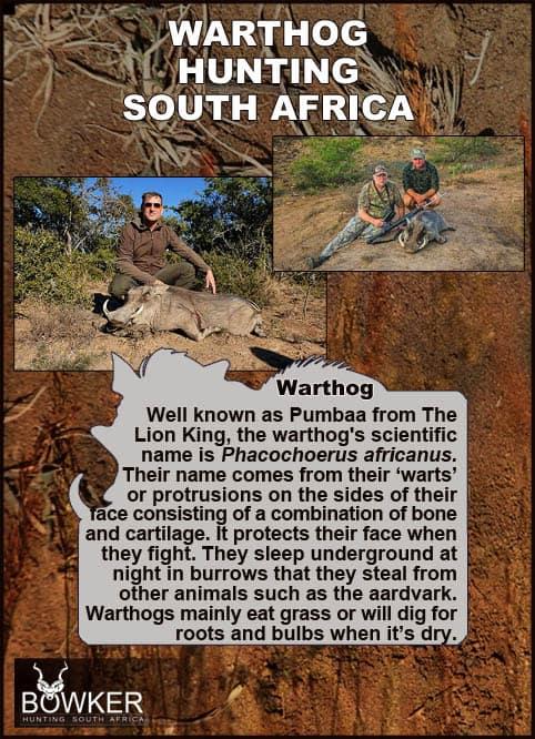 Warthog sleep underground.