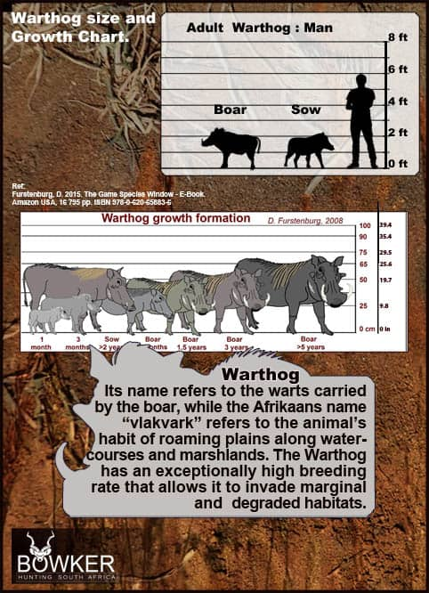 Warthog size and growth chart.