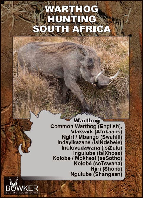 Warthog local names in African languages.