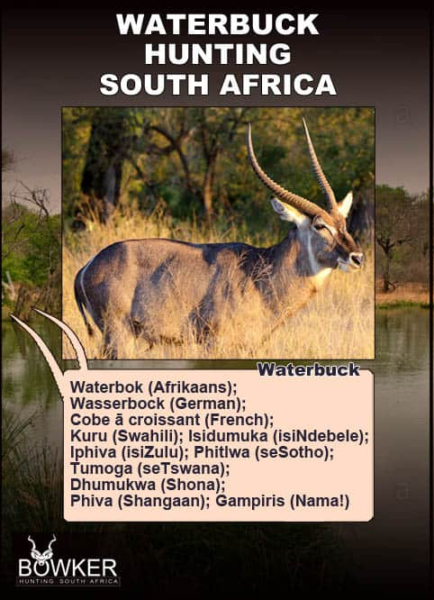 Waterbuck names in local African languages.