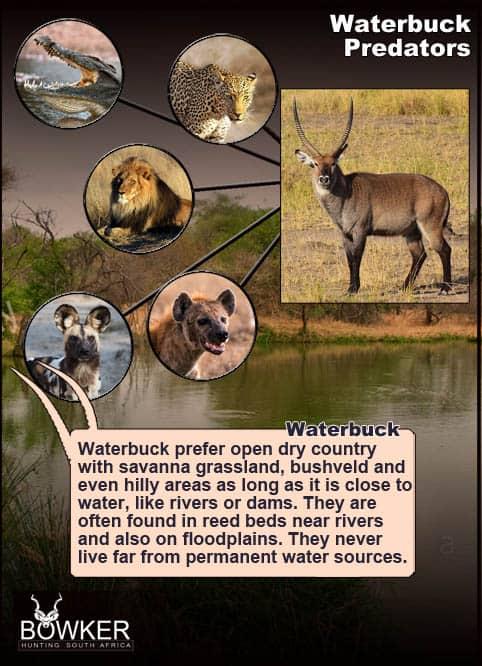Predators include Hyena.