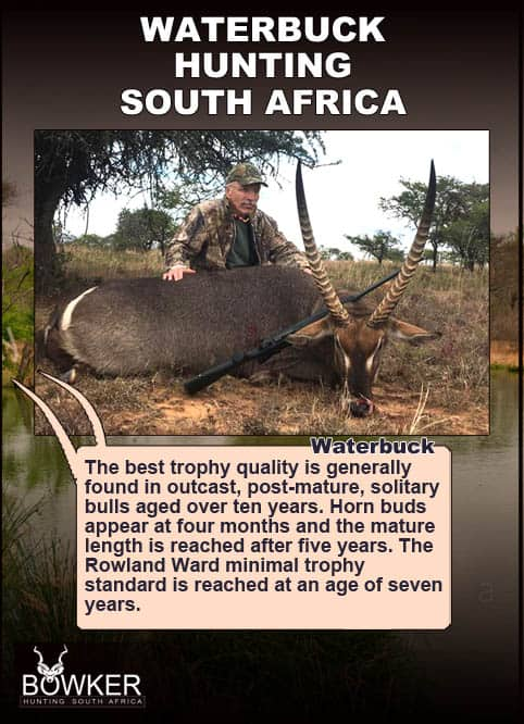 Waterbuck trophy hunting with Nick Bowker