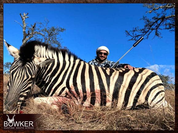 Zebra Hunting in South Africa