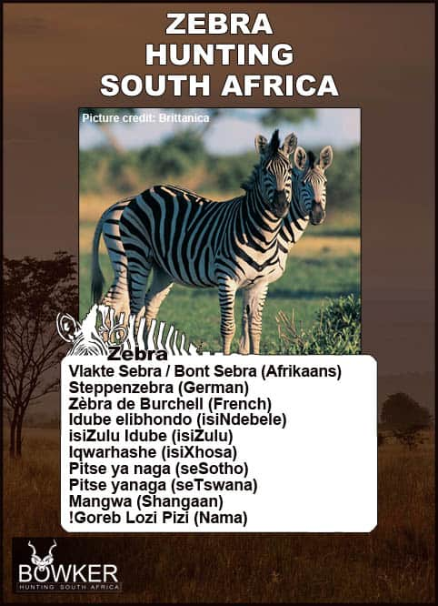Local African names.