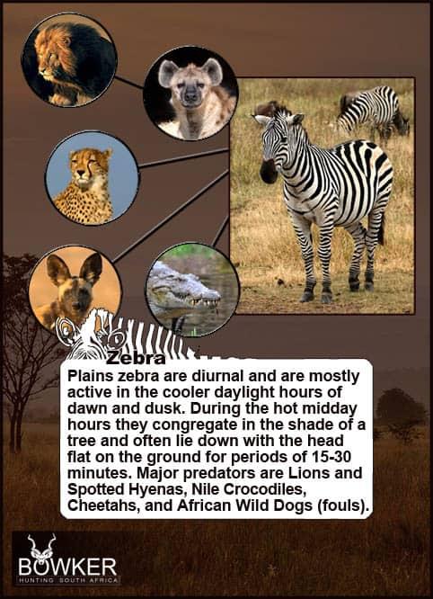 Predators of the Zebra include Hyenas.